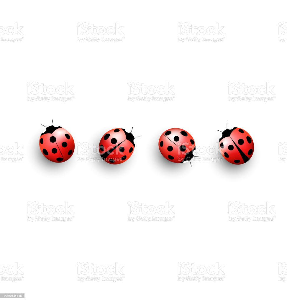 Four lady bugs isolated on white vector art illustration