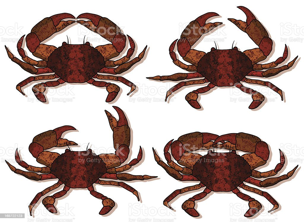 four red crabs royalty-free stock vector art