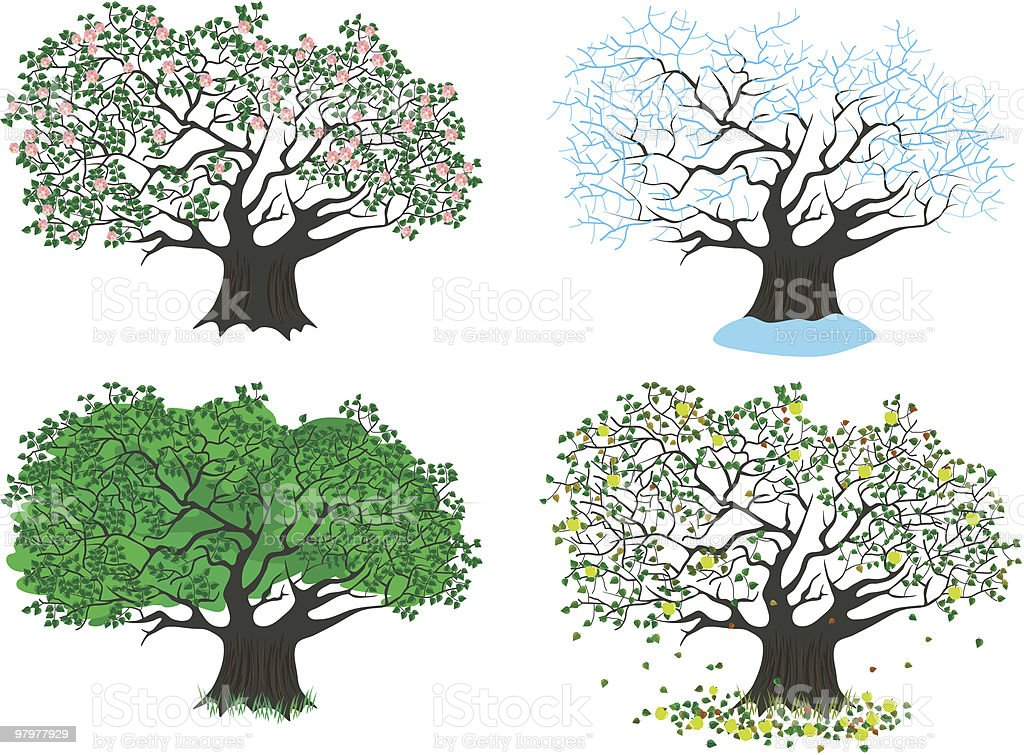 four seasons apple tree royalty-free stock vector art
