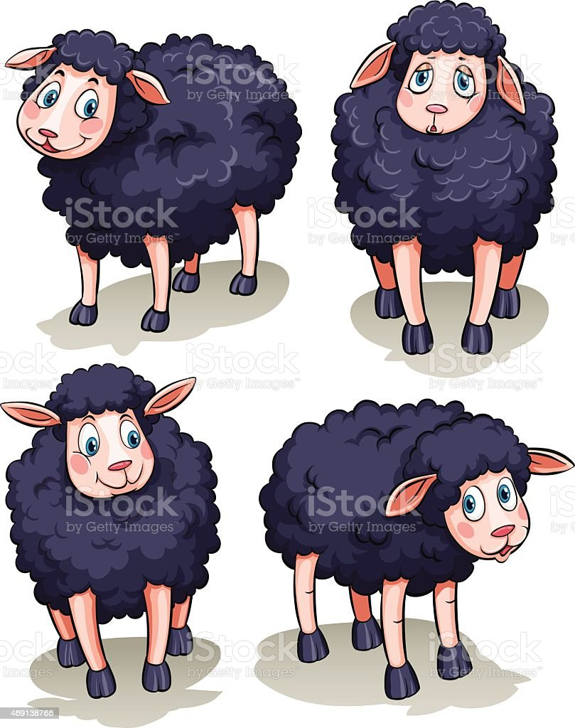 Four sheeps vector art illustration