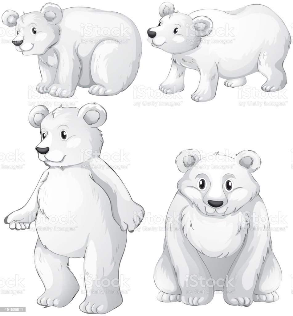 Four white polar bears royalty-free stock vector art