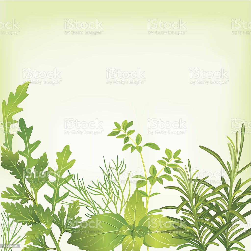 Frame of fresh herbs royalty-free stock vector art