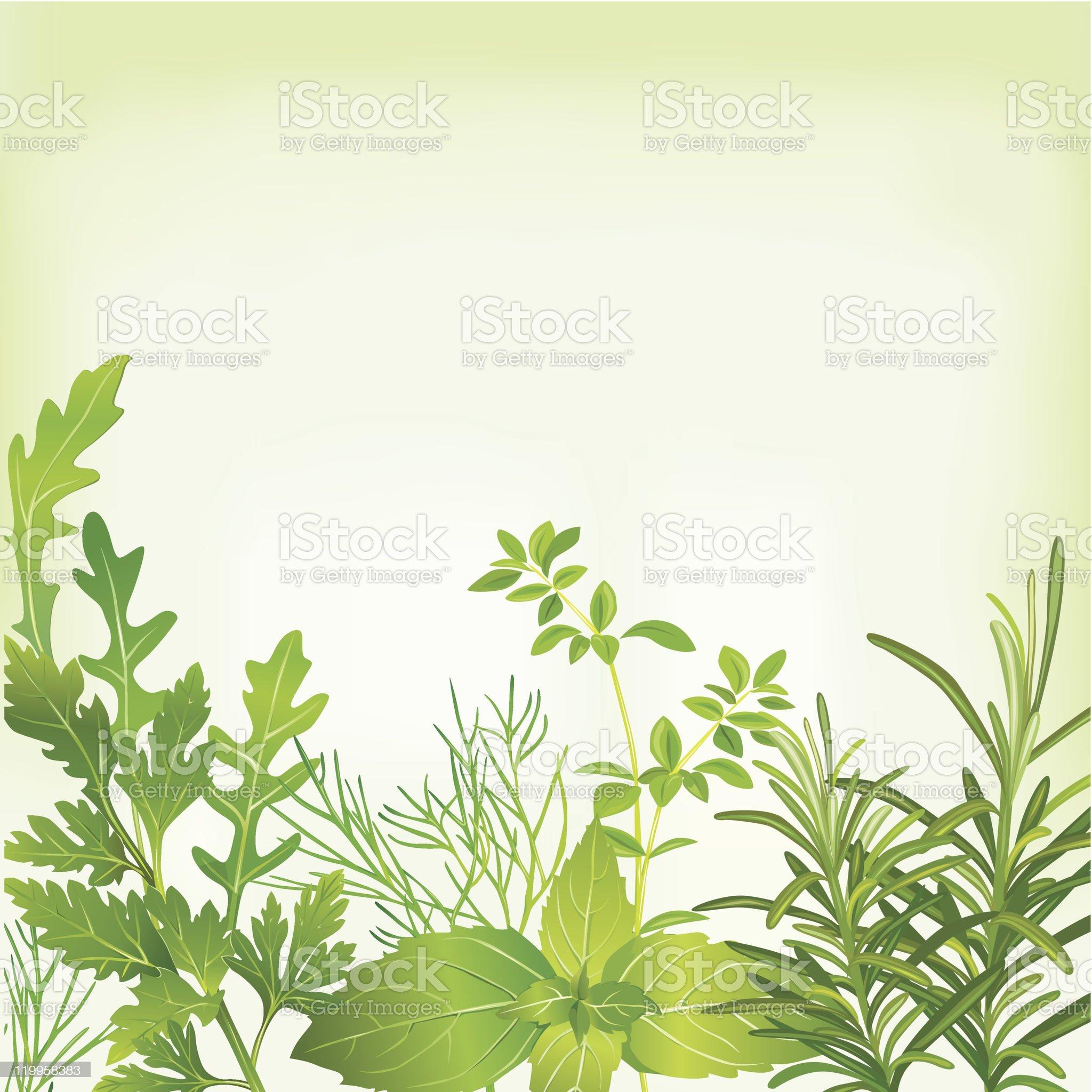 Frame of fresh herbs royalty-free stock vector art