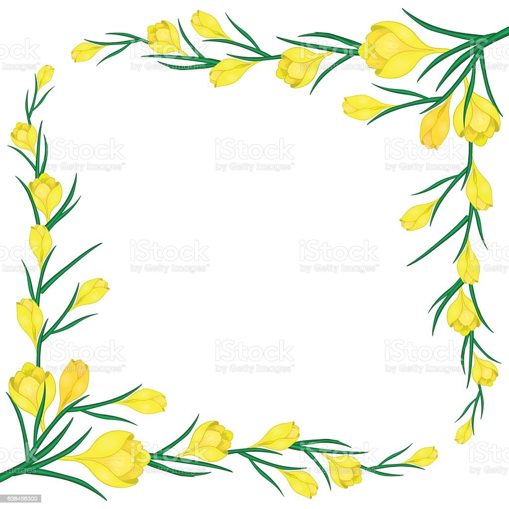 frame with yellow crocuses-01 vector art illustration