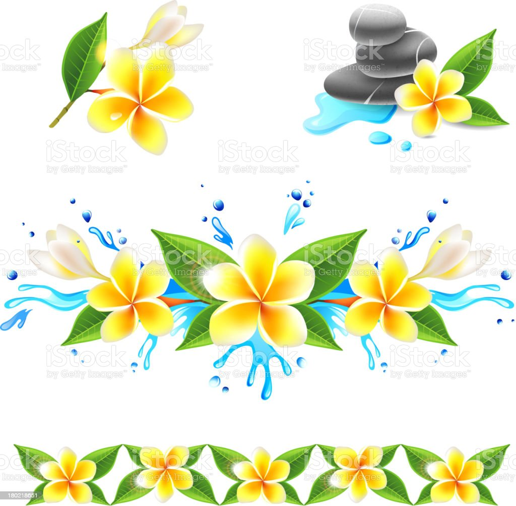 Frangipani flowers royalty-free stock vector art