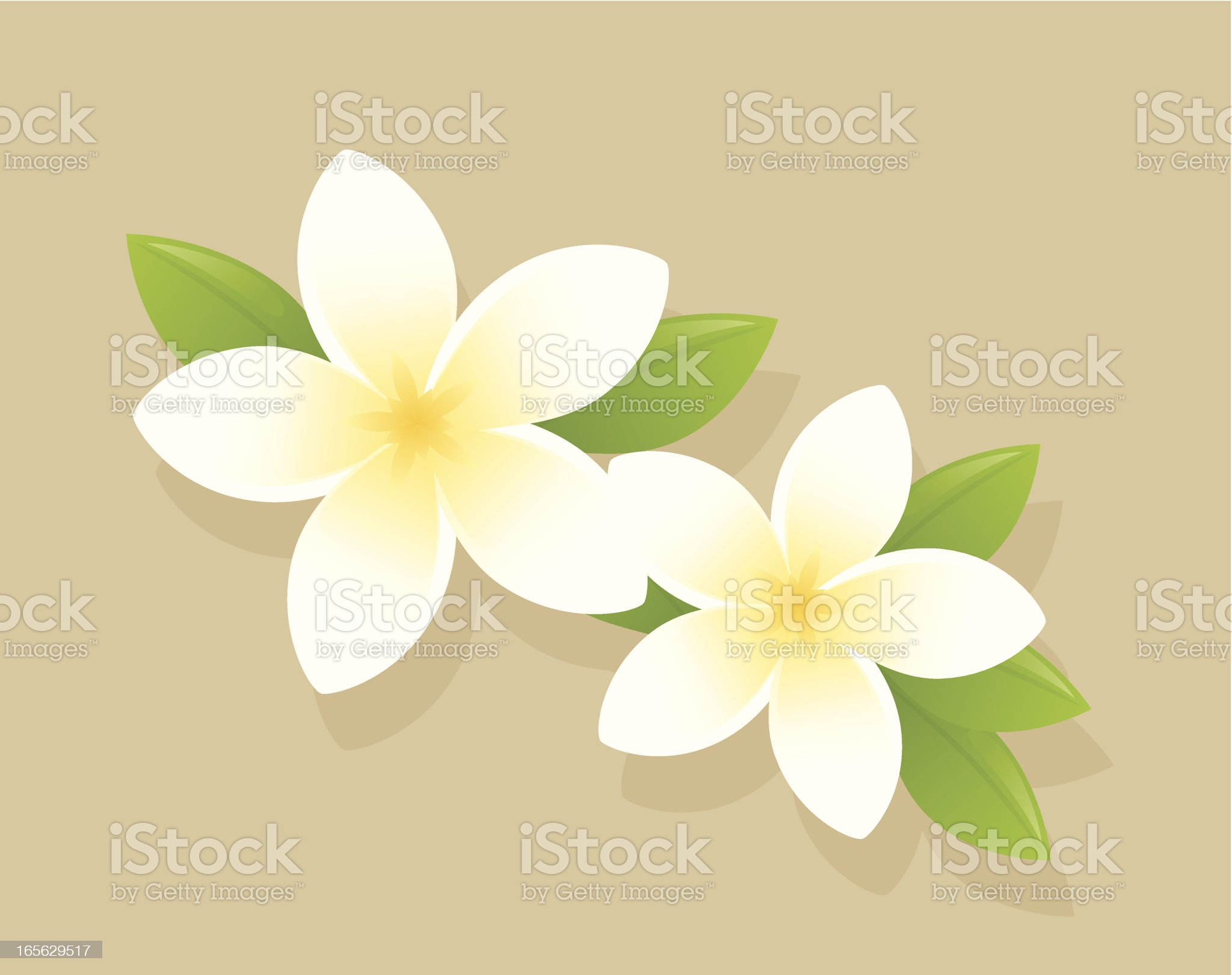 Frangipani royalty-free stock vector art