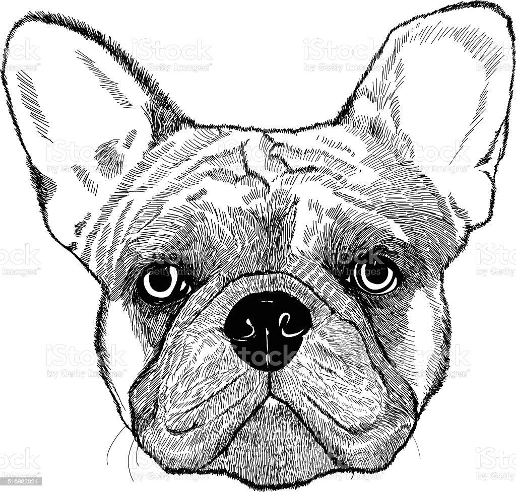 French bulldog, vector dog illustration vector art illustration