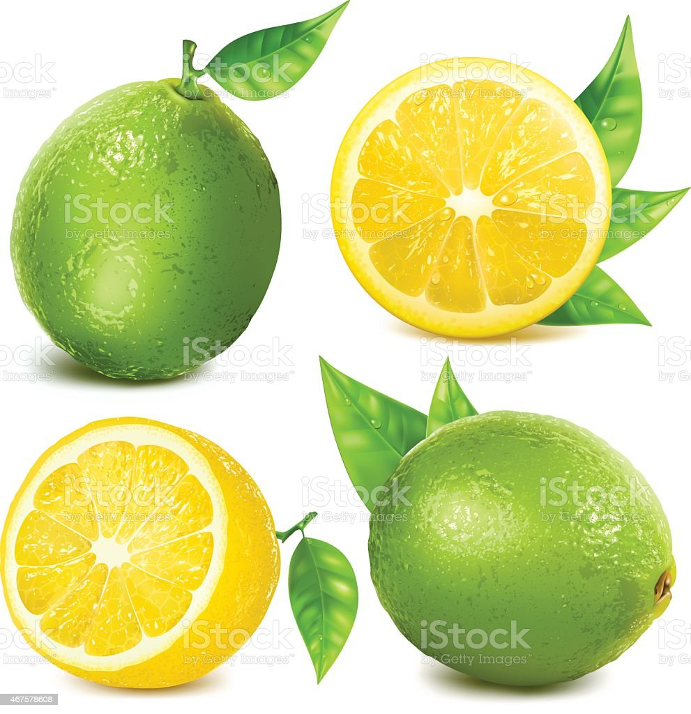 Fresh citrus fruits vector art illustration