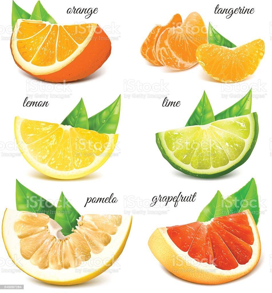 Fresh citrus fruits. vector art illustration