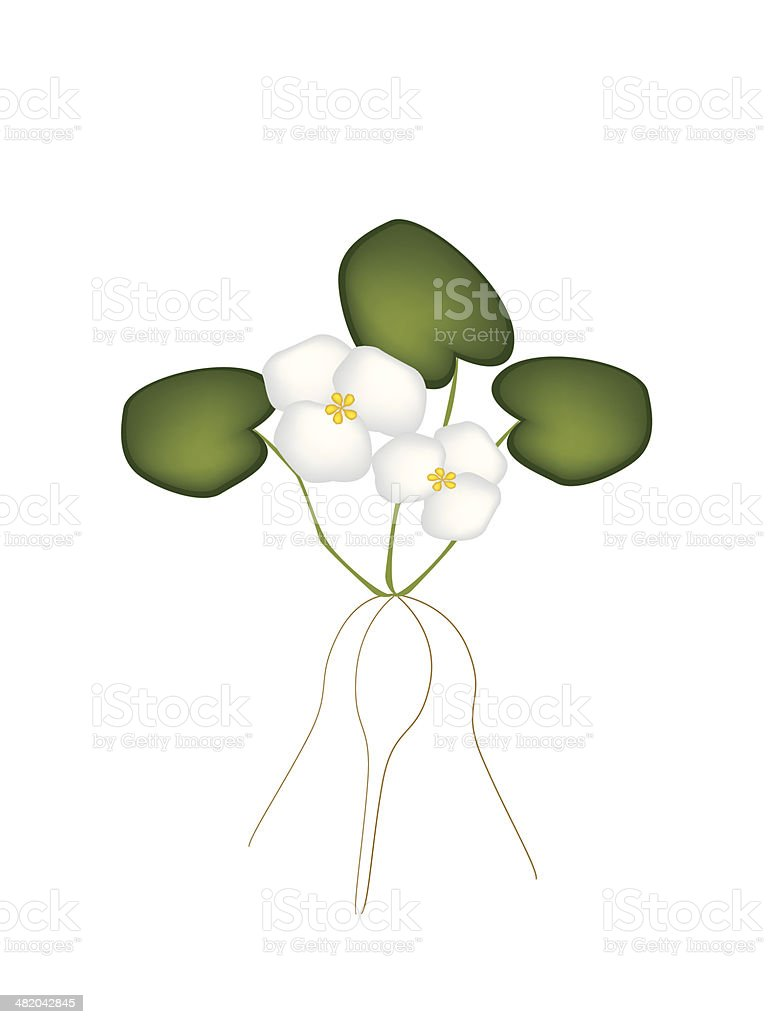 Fresh Common Frogbit Plant on White Background vector art illustration