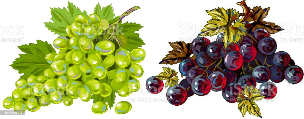 Fresh Green and Red Grapes isolated on white vector art illustration