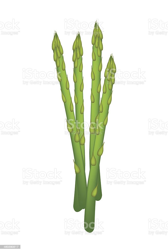 Fresh Green Asparagus on A White Background vector art illustration