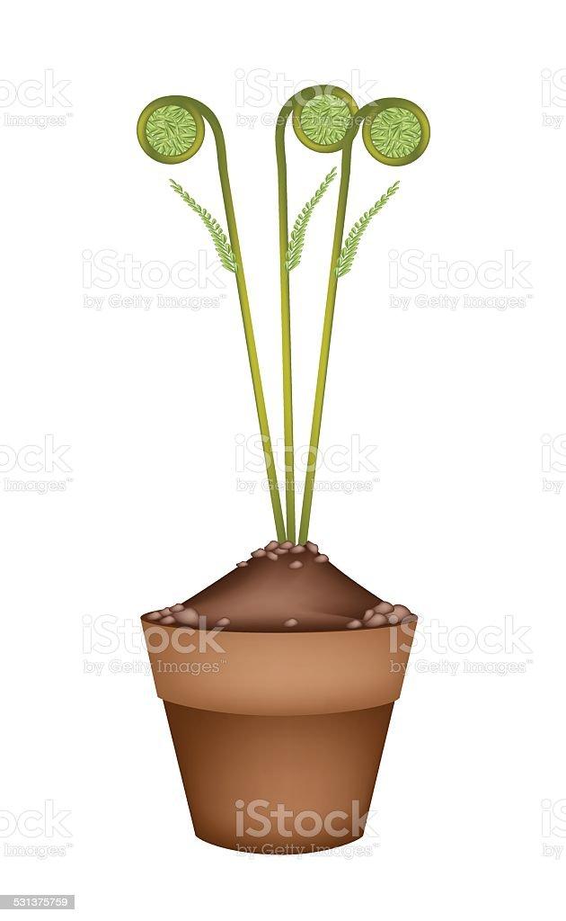 Fresh Green Fiddleheads in Ceramic Flower Pots vector art illustration