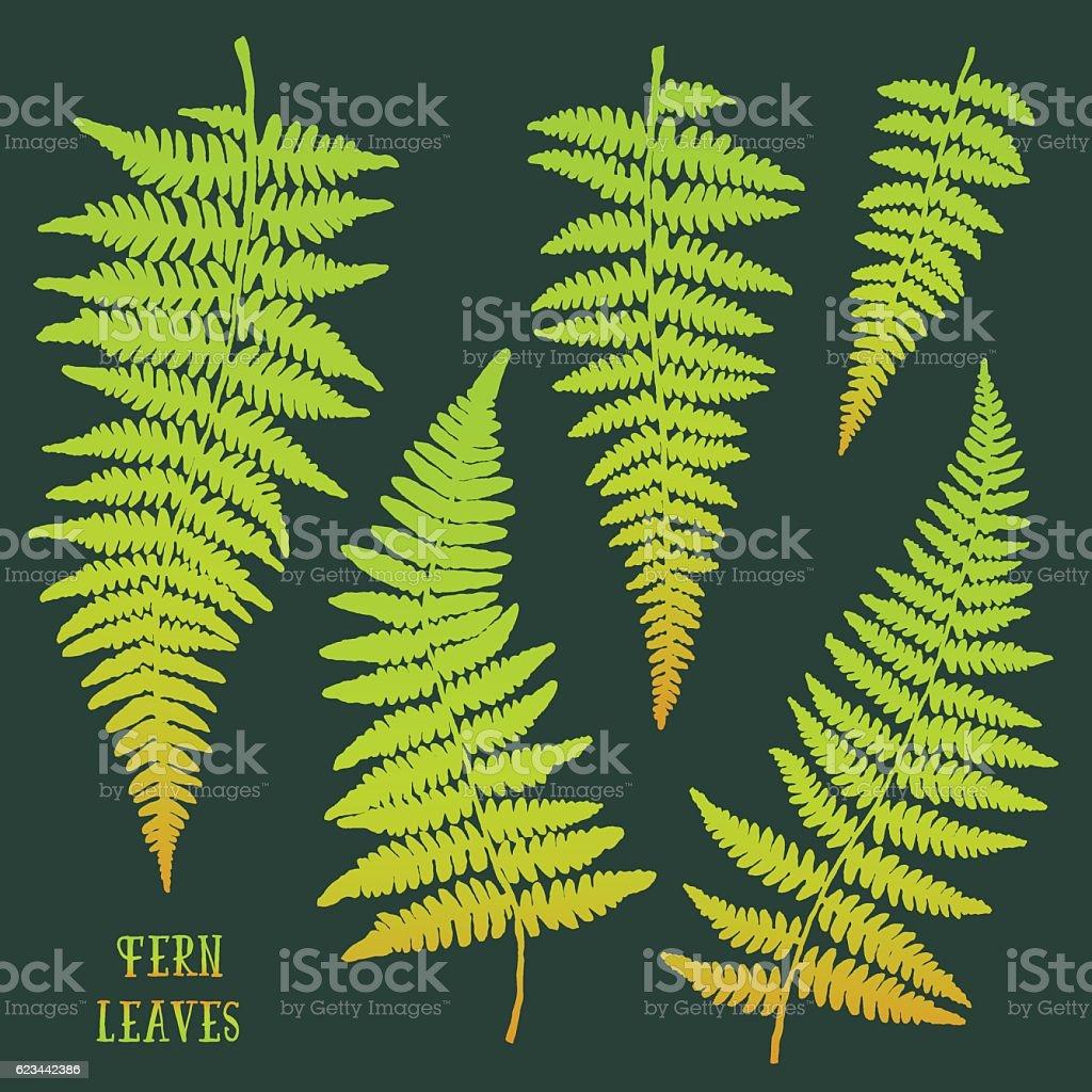 Fresh green hand drawn fern leaves isolated on dark background. vector art illustration