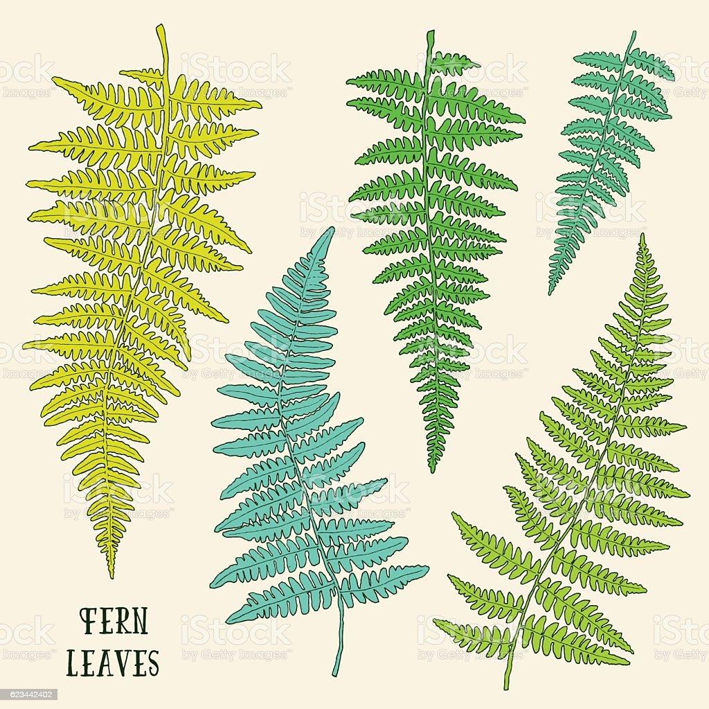 Fresh green hand drawn fern leaves isolated on white background. vector art illustration