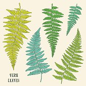 Fresh green hand drawn fern leaves isolated on white background.