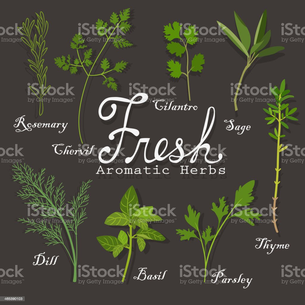 Fresh Herbs vector art illustration