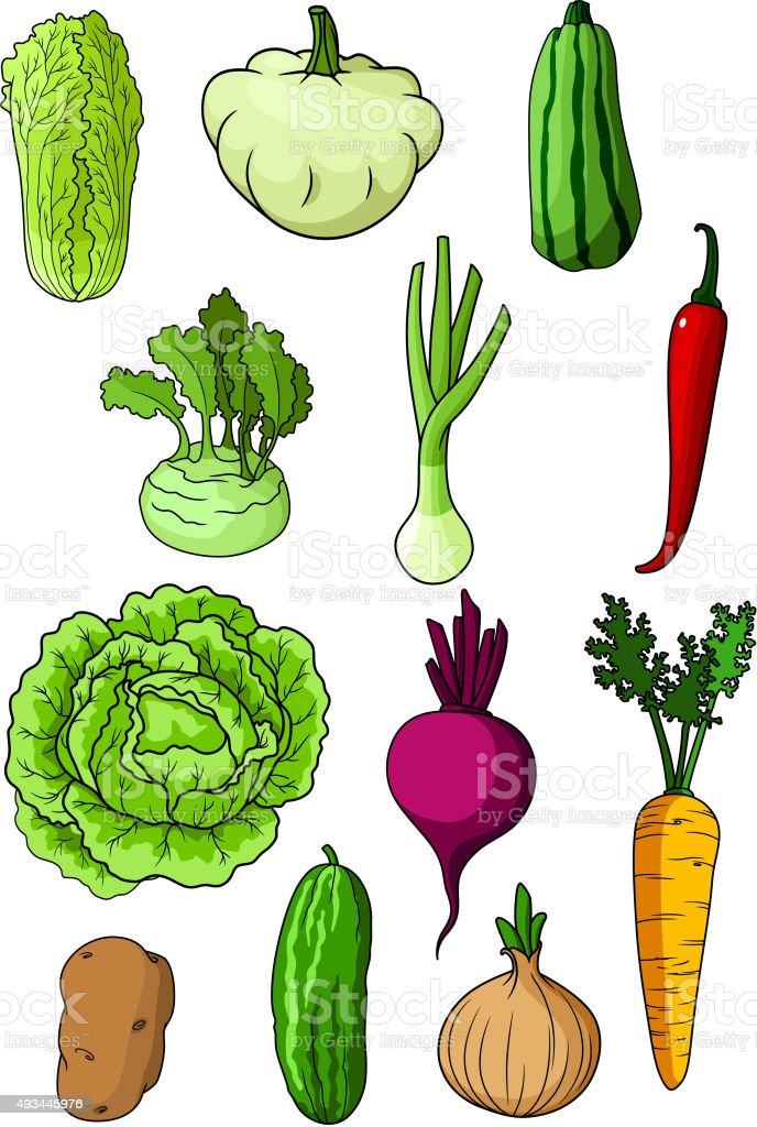 Fresh isolated organic farm vegetables vector art illustration