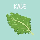 fresh kale on blue balckground vector