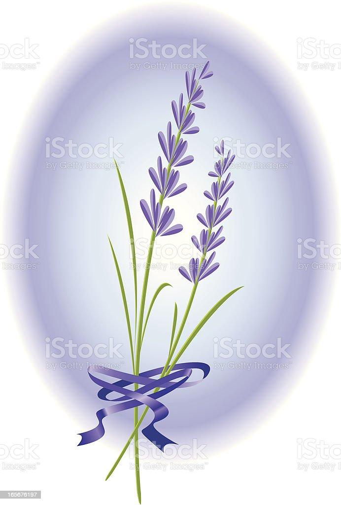 fresh lavender royalty-free stock vector art