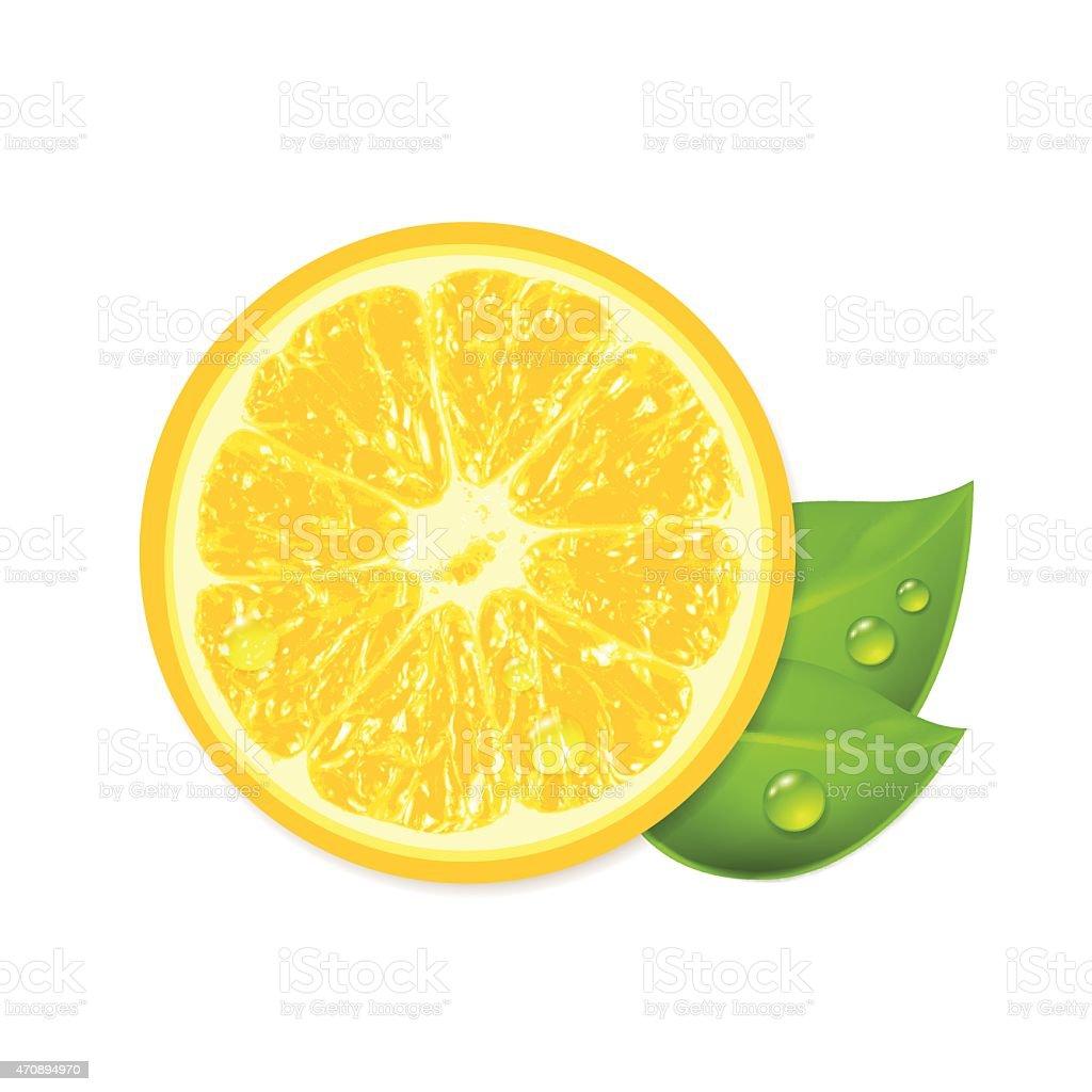 Fresh lemon isolated on white background vector art illustration