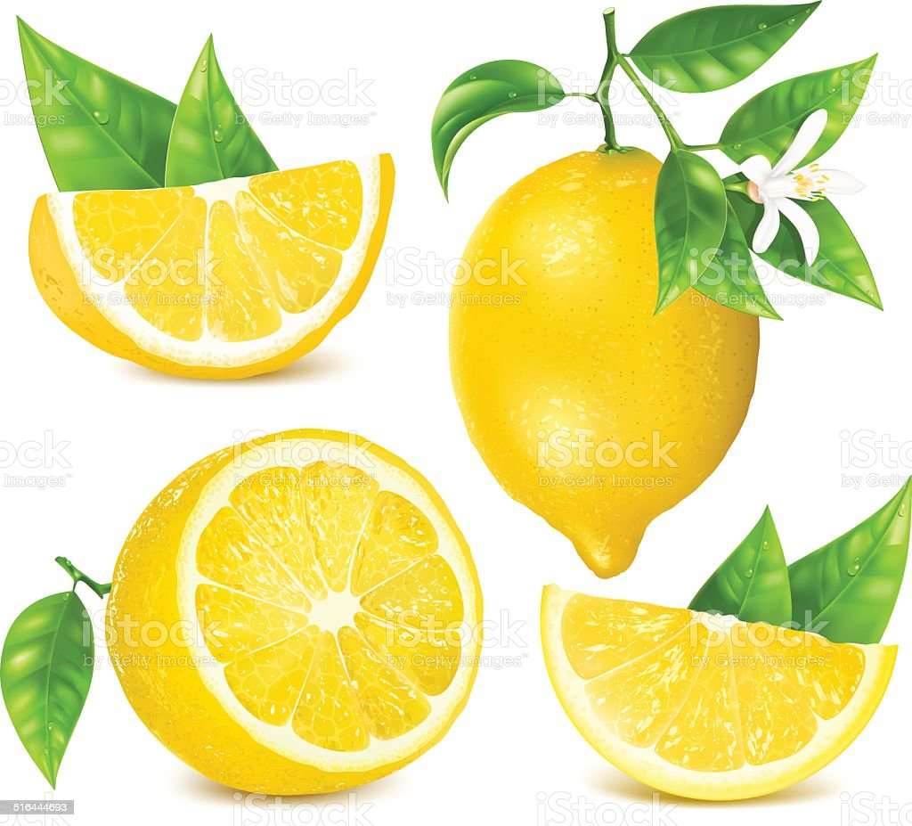 Fresh lemons with leaves and blossom. vector art illustration