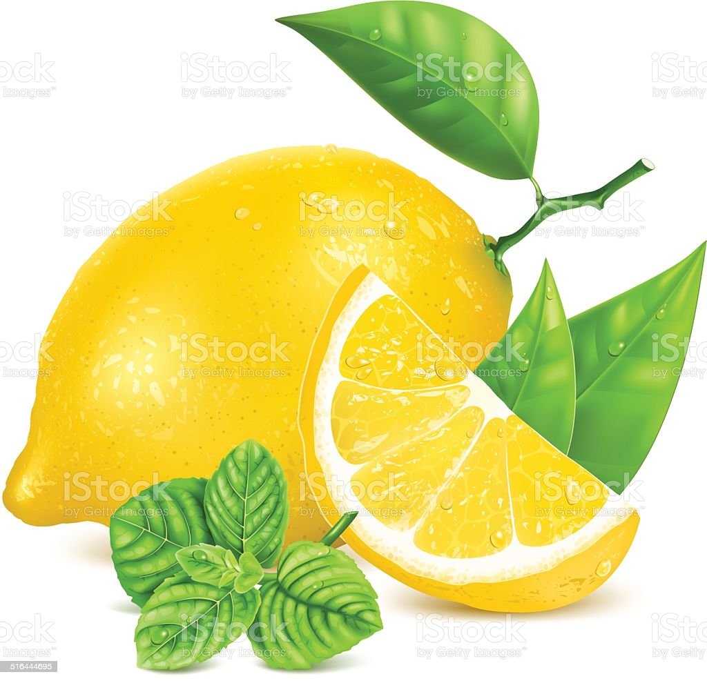 Fresh lemons with leaves and mint. vector art illustration