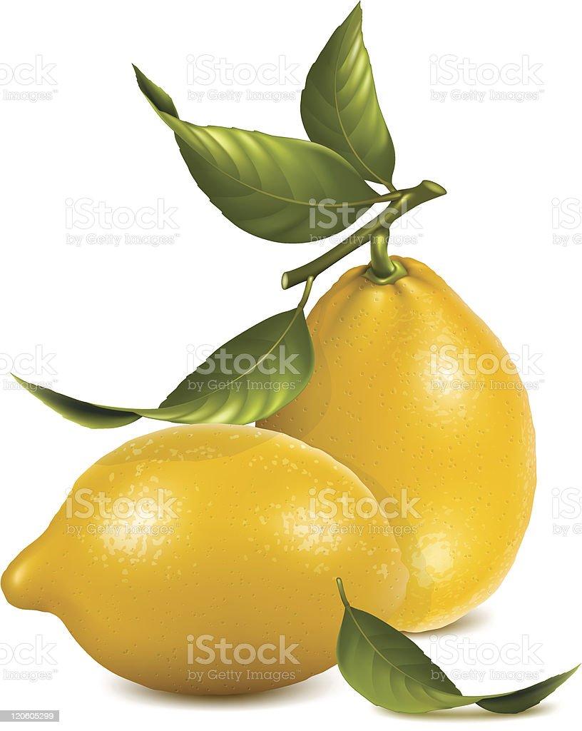 Fresh lemons with leaves. royalty-free stock vector art