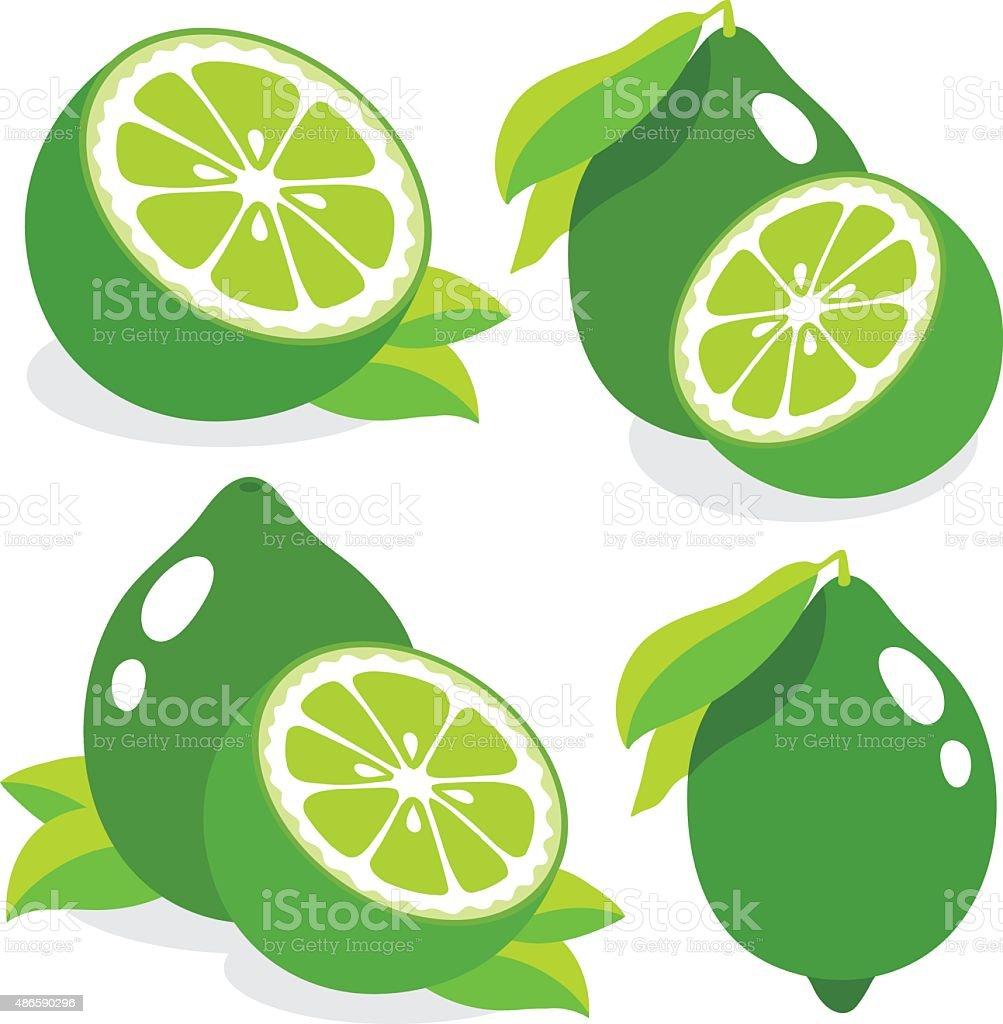 Fresh limes vector illustration vector art illustration