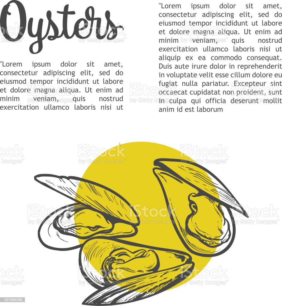 fresh marine oyster vector art illustration