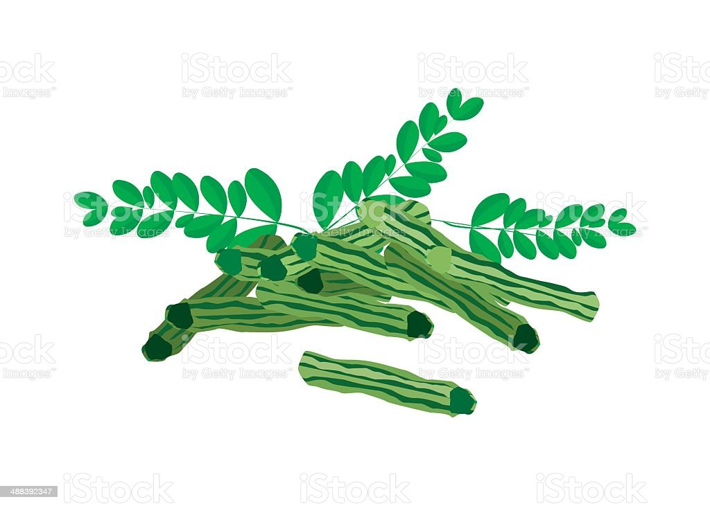 Fresh Moringa Fruit and Leaves on White Background vector art illustration