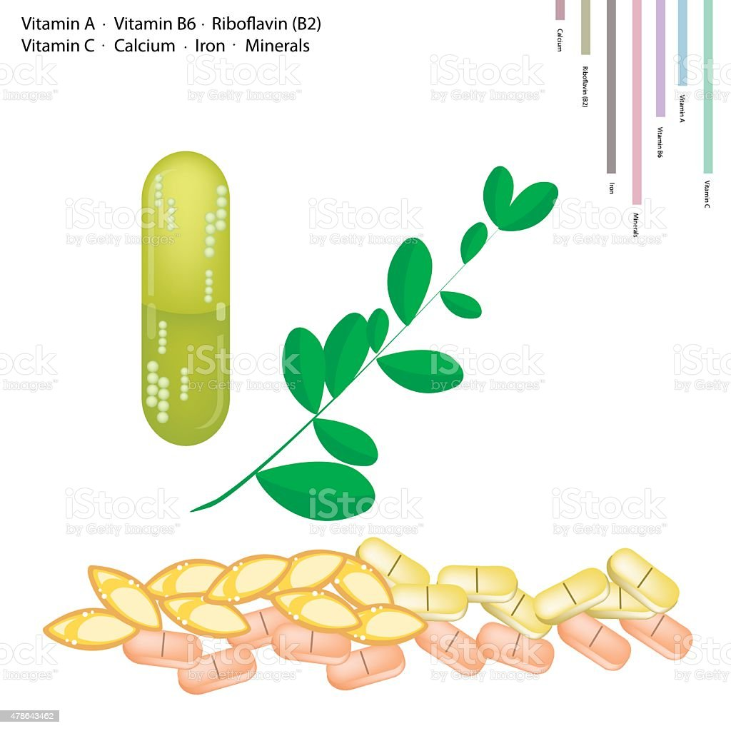 Fresh Moringa Leaves with Vitamin A, B6, B2 and C vector art illustration