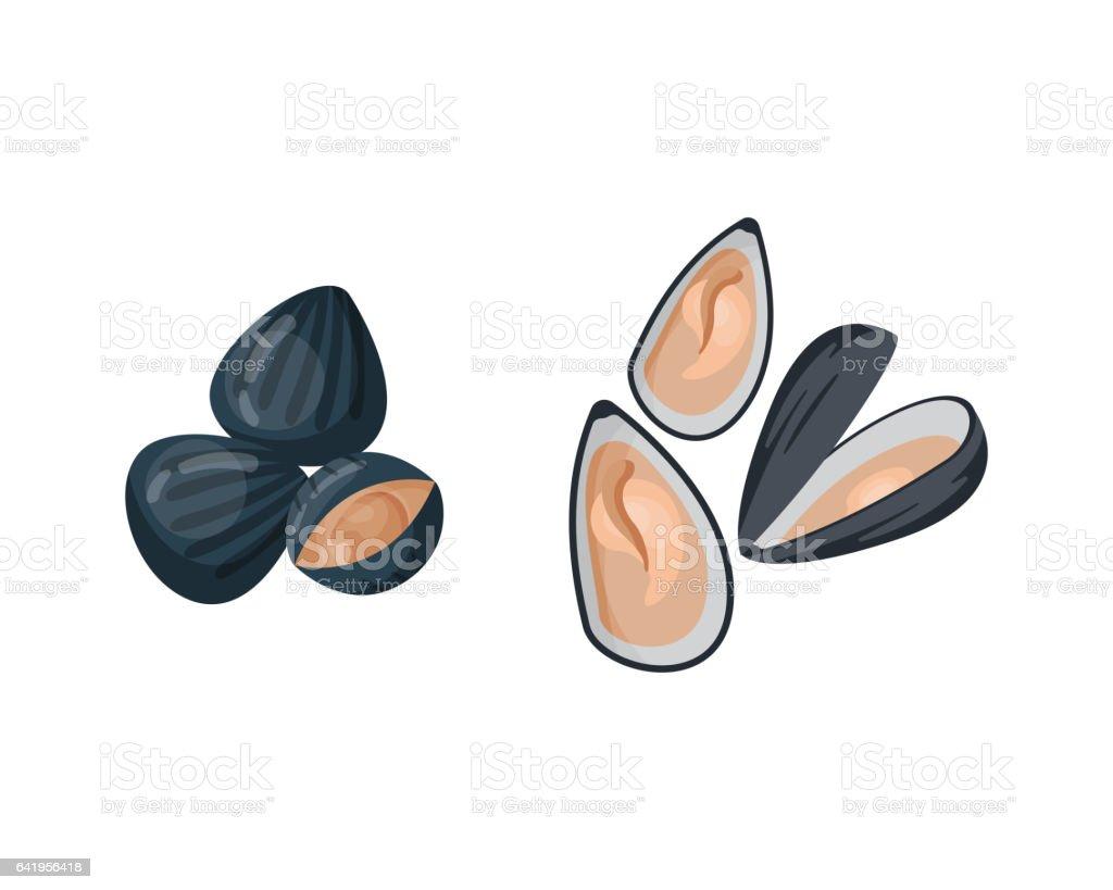 Fresh mussel vector illustration vector art illustration