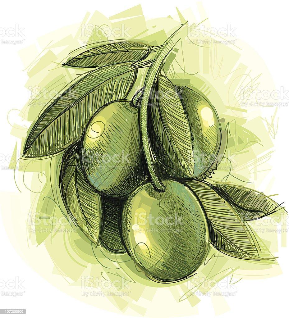Fresh Olives vector art illustration