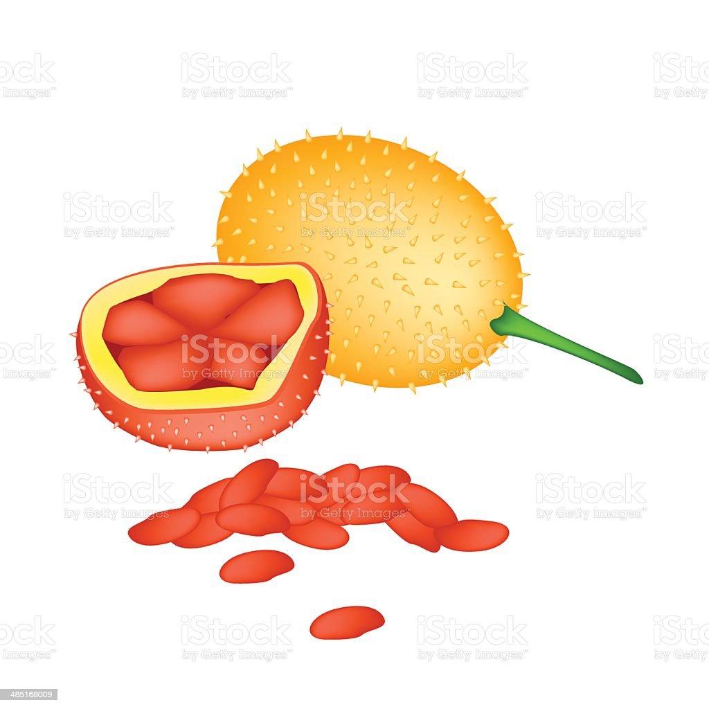 Fresh Orange Baby Jackfruits on White Background vector art illustration