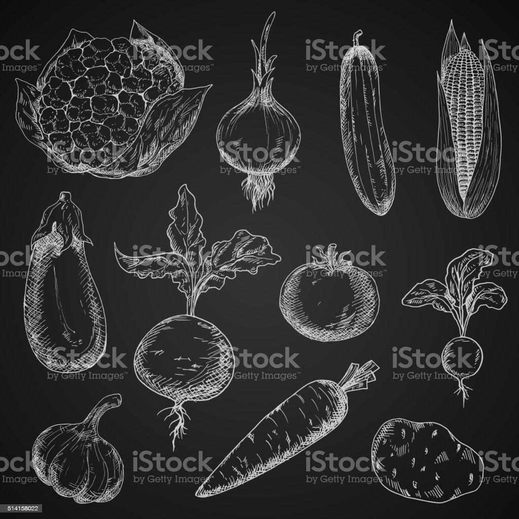Fresh organic vegetables sketches set vector art illustration