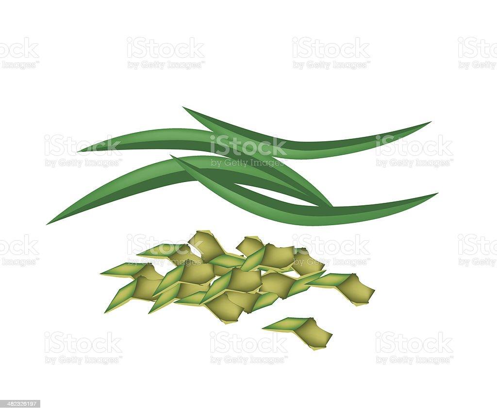 Fresh Pandan Leaves on A White Background vector art illustration