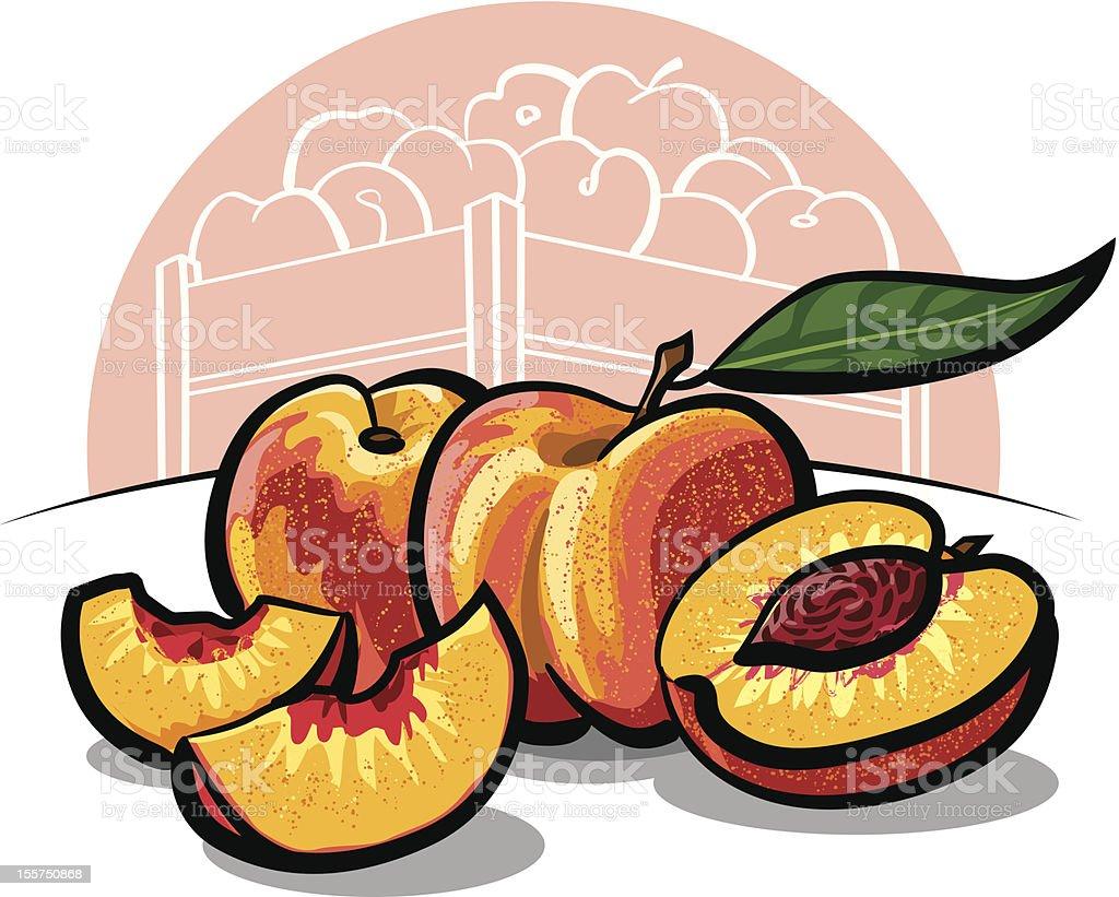 fresh peach fruits royalty-free stock vector art