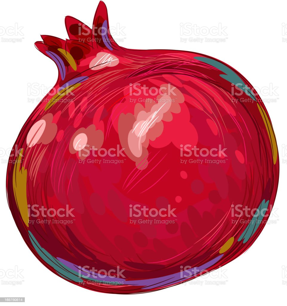 Fresh Pomegranate Isolated on white vector art illustration