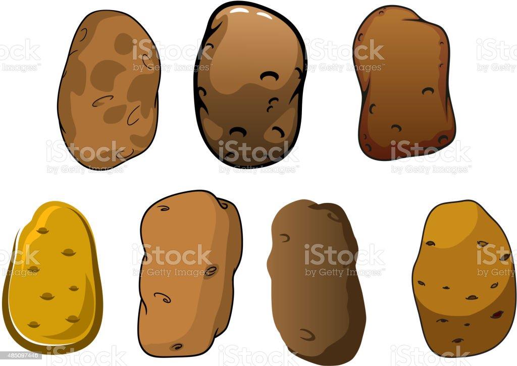 Fresh potatoes vegetables with brown skin vector art illustration