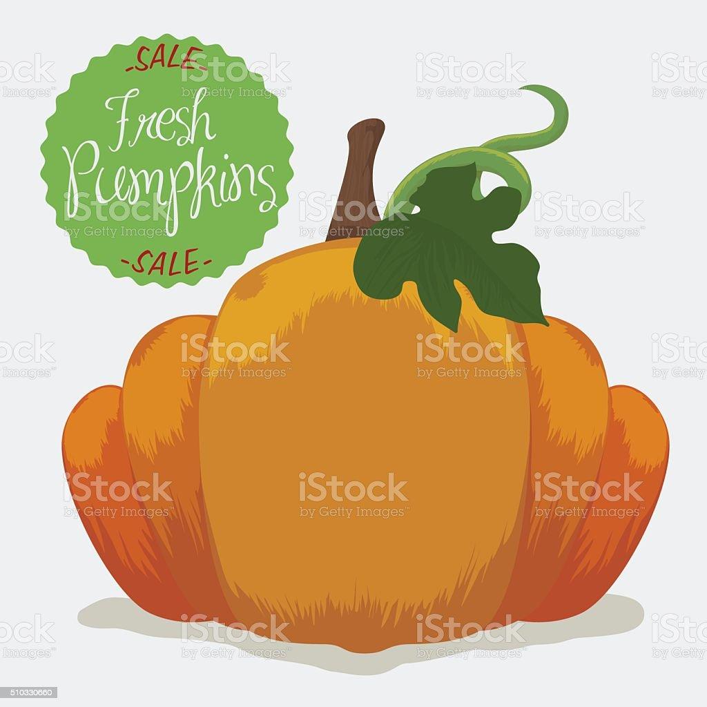 Fresh Pumpkin on Sale vector art illustration