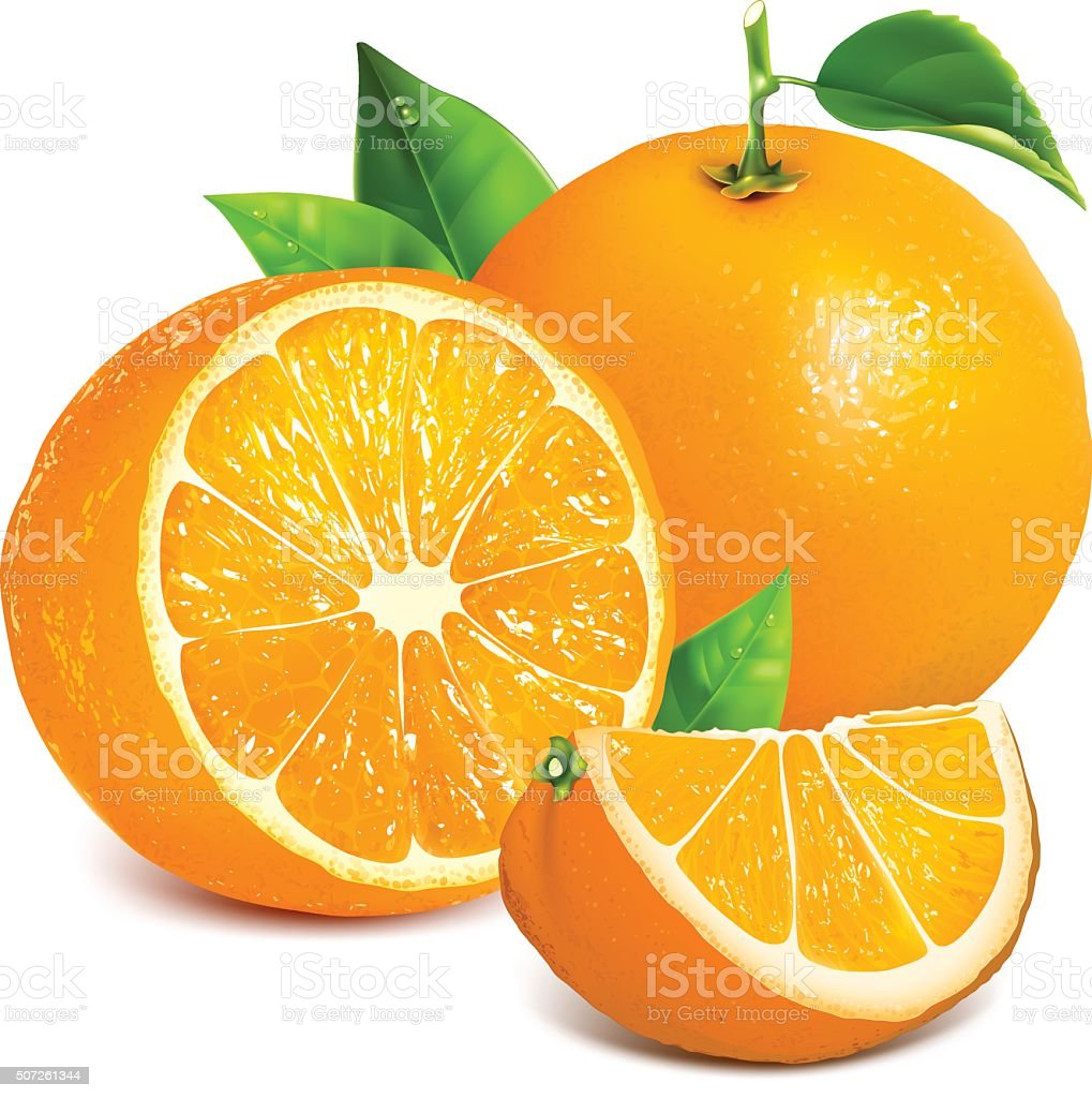 Fresh ripe oranges vector art illustration