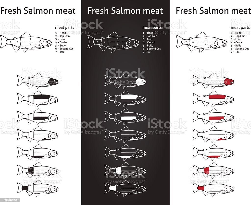 Fresh salmon meat diagram vector art illustration