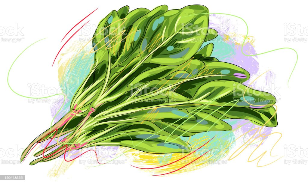 Fresh Spinach royalty-free stock vector art