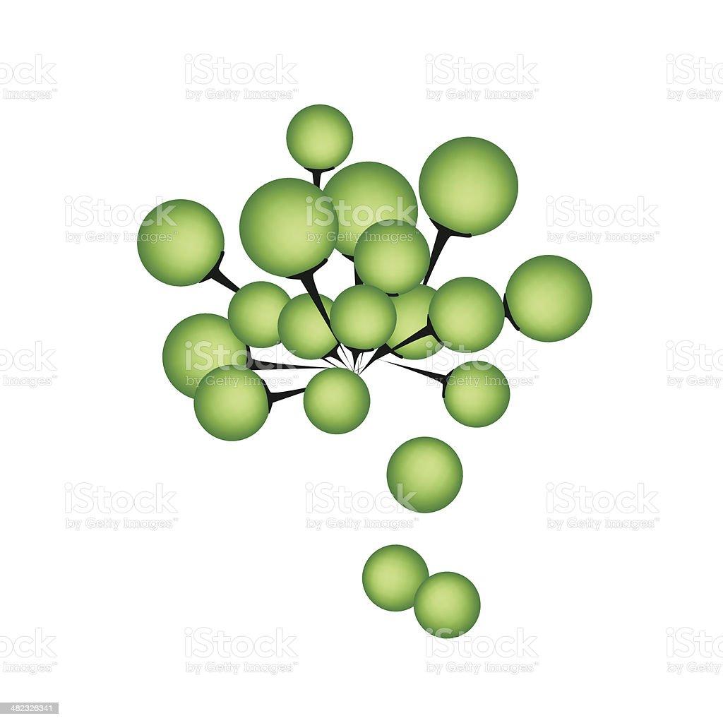 Fresh Turkey Berry on A White Background vector art illustration