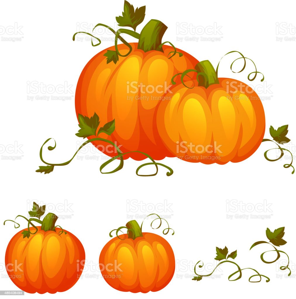Fresh two pumpkin with sweet green leafs vector art illustration