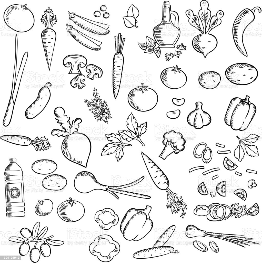 Fresh vegetables and condiments sketch icon vector art illustration