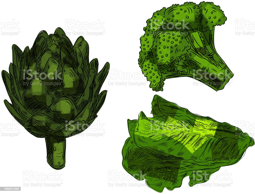 Fresh Vegetables isolated on white vector art illustration