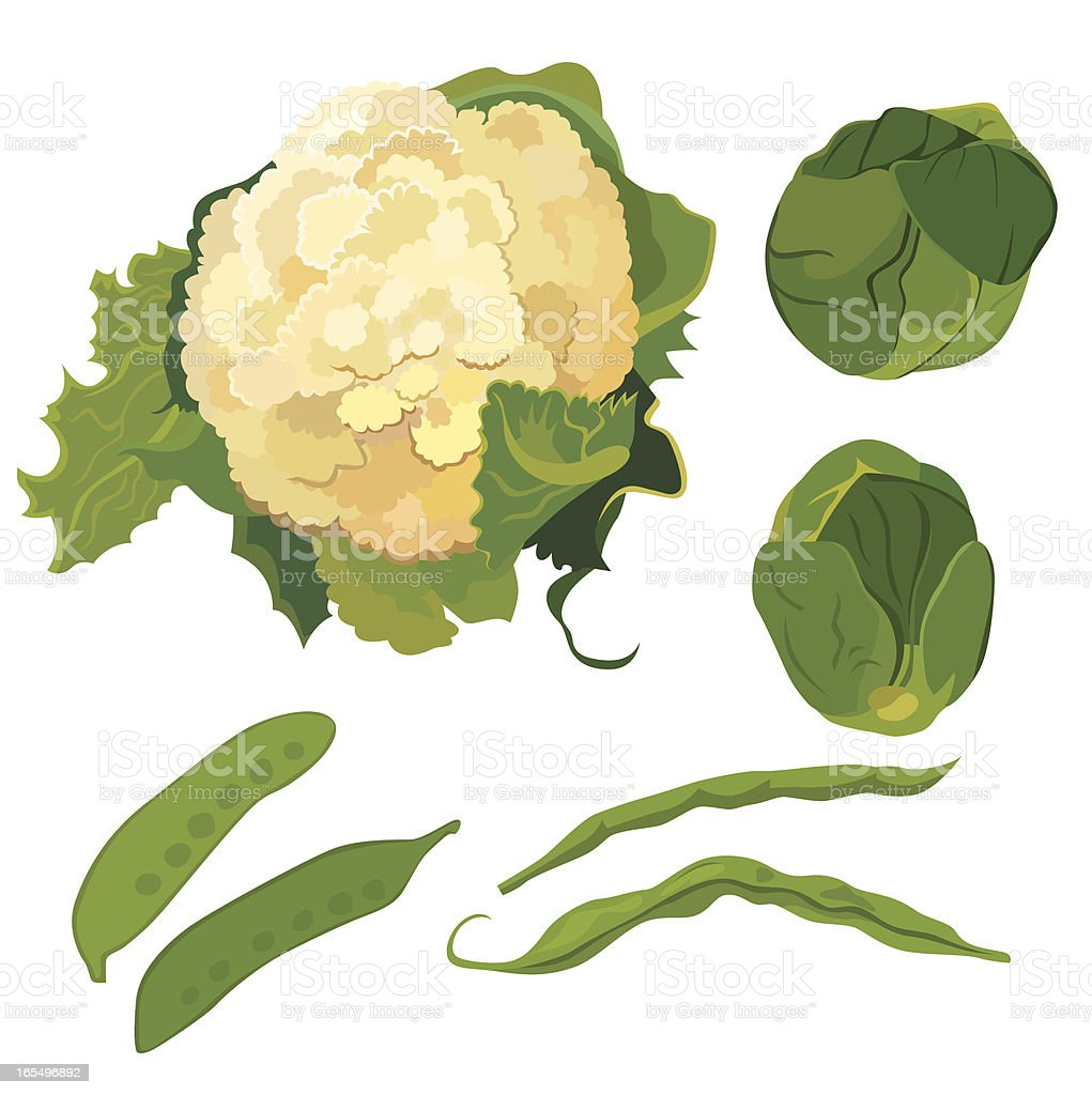 fresh vegetables set vector art illustration
