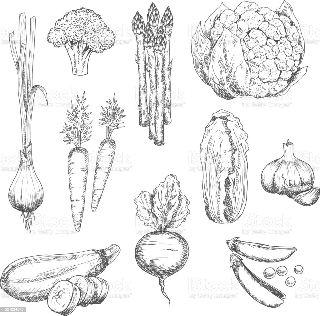 Fresh vegetables sketch for vegetarian food design vector art illustration